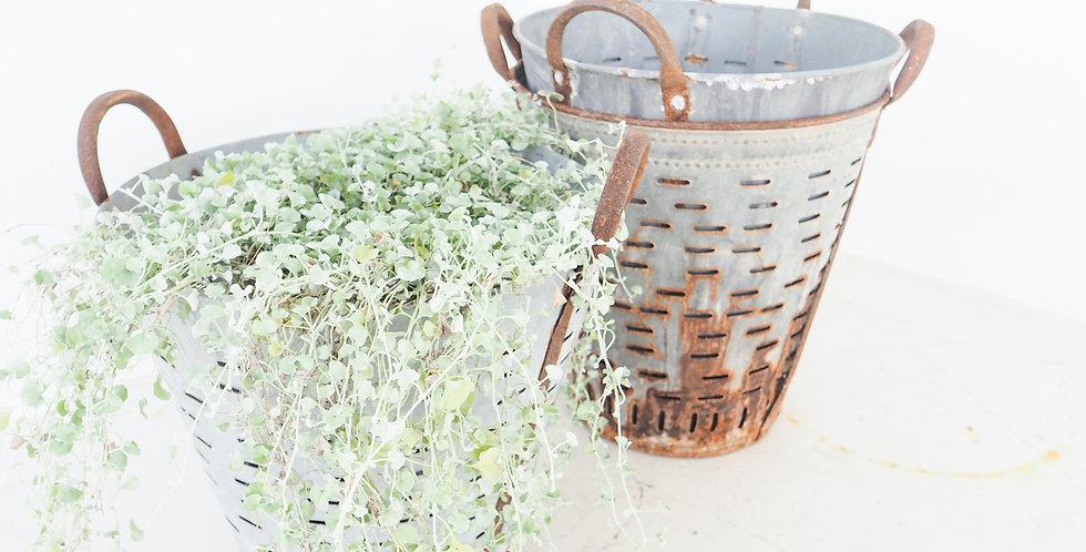 Metal Olive Picking Bucket