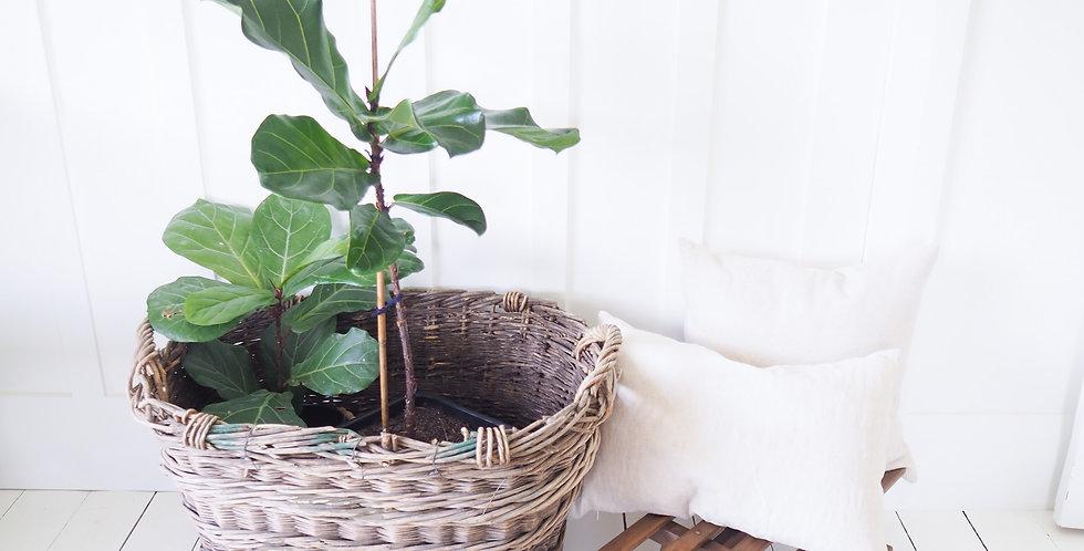 Vintage French Grape Basket