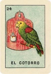 24. El Gotorro Loteria.jpeg