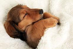 dog-sleeping-bed-funny-104__605.jpg