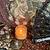 Spiritual Development and Mindfulness