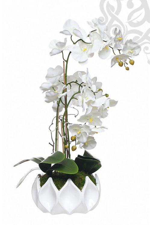 ORCHID ARRANGEMENT - ARANHA