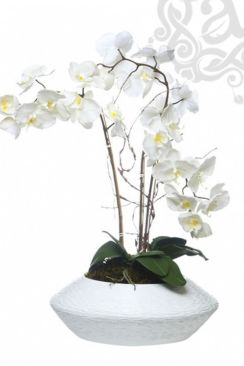 ORCHID ARRANGEMENT - OVNI