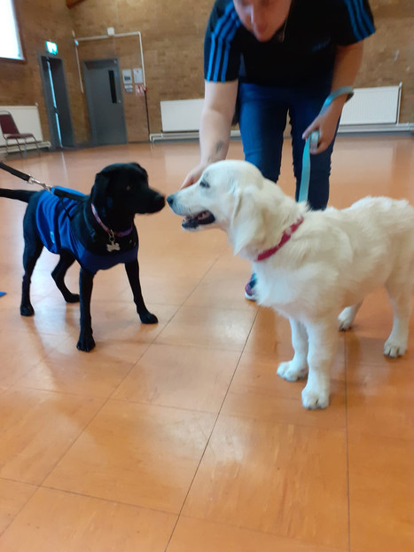 Two dogs meeting each other. Noses touching