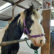 PJ the horse