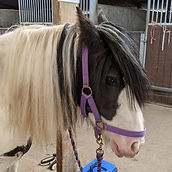 Poppet the horse