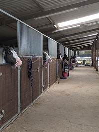 Horsewyse stable