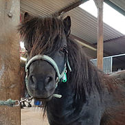 Harry the horse