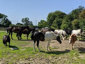 Horsewyse herd