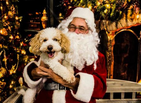 Santapaws 2018 at Bark Ave Bath & Biscuit Dog Grooming!