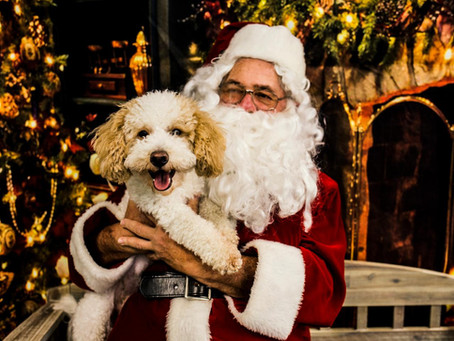 Santapaws 2018 at Bark Ave Bath & Biscuit Dog Grooming!