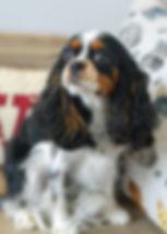 Bark 0004.jpg
