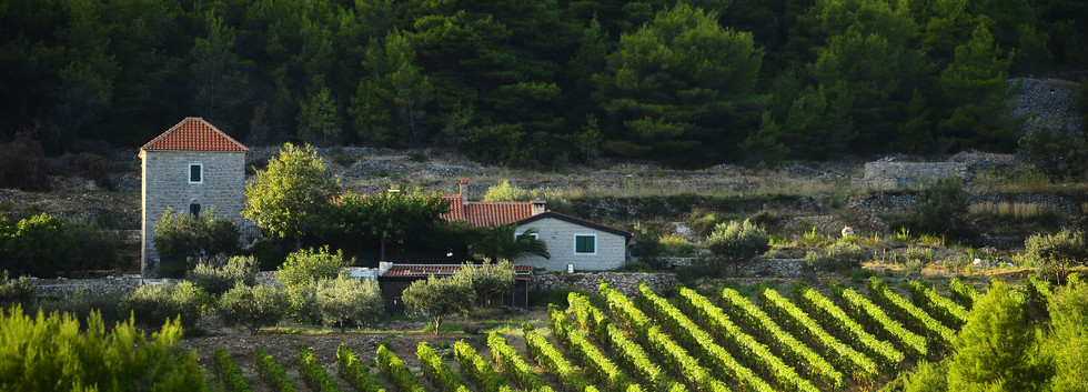 18. Vis vineyards_Photo creator Ivo Perv