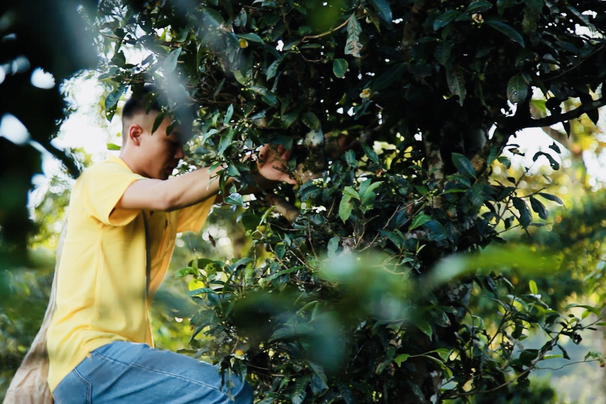 Climb ancient Tea Tree