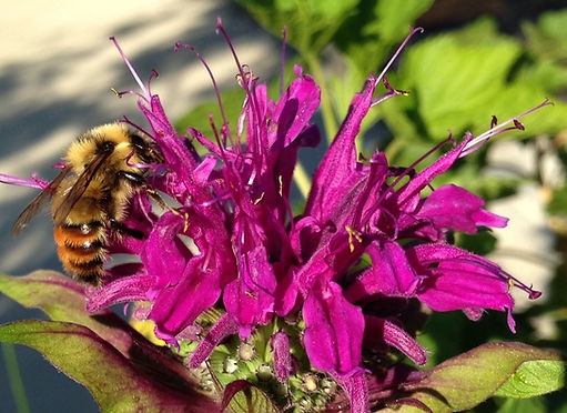 A healthy garden full of pollinators makes a healthy planet.  Help our beneficial insects by avoiding harsh chemical fertilizers.