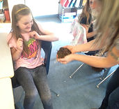 Compost worms in the classroom in Okotoks and Calgary, Alberta.