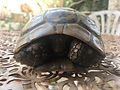 IMG_4728 truam turtle.JPG