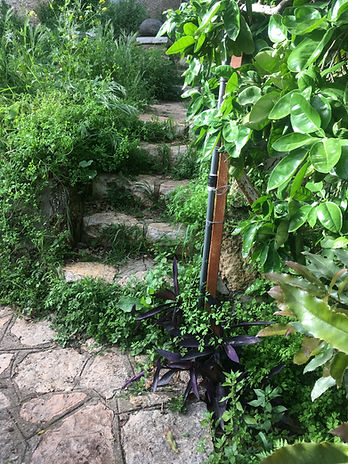 stone steps up from the path.JPG