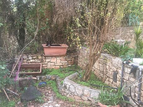 Garden Charuvy Groovy.JPG