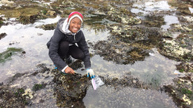 Studying the effects of climate change on mussels