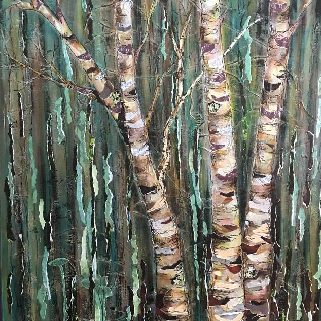 Summer Birch Trees