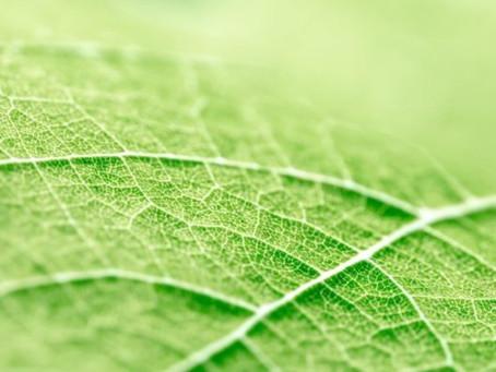 C'est quoi l'approche holistique en Naturopathie ?