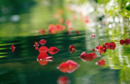 Des fleurs pour nos émotions