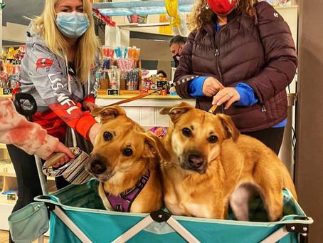 The Dog Moms of OCNY First Dog Mom Crawl Recap