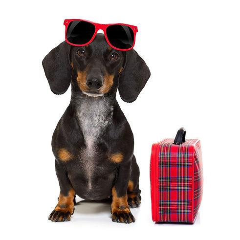 Dog with bag 6.83  x 6.83 .jpg