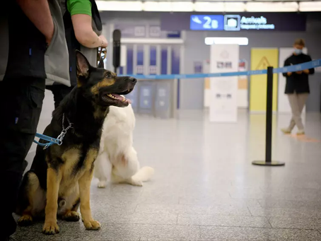 Finland airport has started using dogs to detect passengers infected with coronavirus