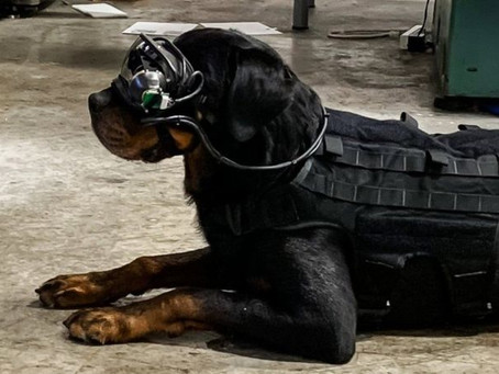 Augmented reality goggles for dogs