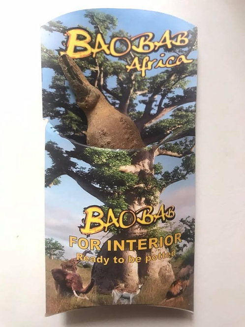 Baobab (Adansonia digitata) -Un Groot