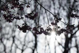 夕日を浴びて 春