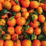 organic tangerines oranges