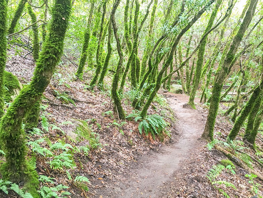 Travel Blog Features Castle Rock and Henry Cowell Redwoods State Parks