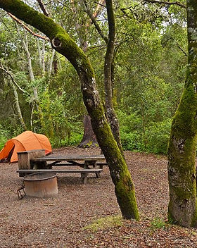 henry-cowell-redwoods-state-park-campgro