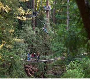 Redwood Canopy Zipline.jpg