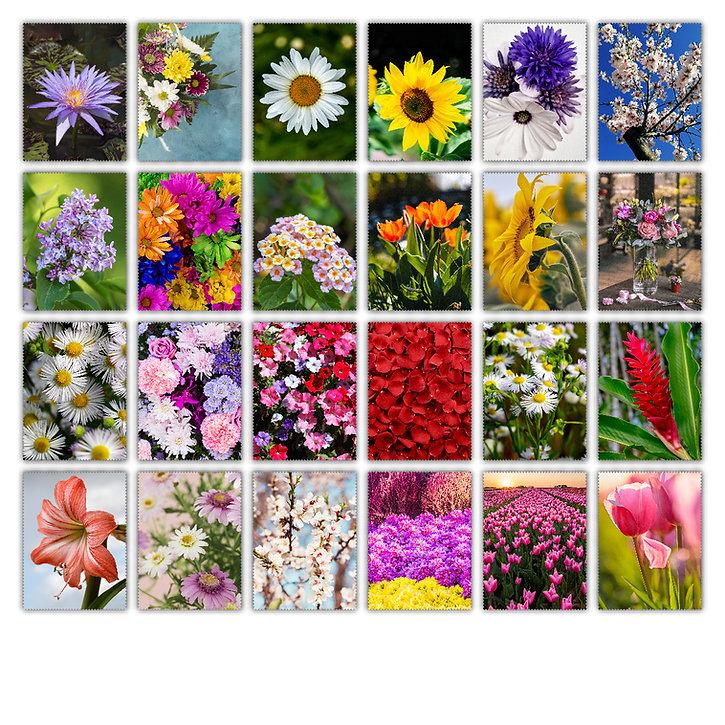 9- Fleurs 1.jpg