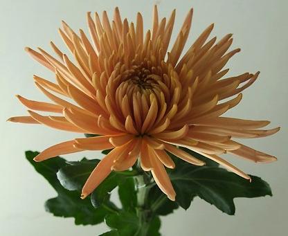 【生花の販売 】お正月の切花セット