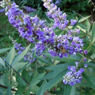 Bee&Vitec-1.jpg
