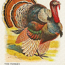 Some Tasty Ideas for Leftover Turkey