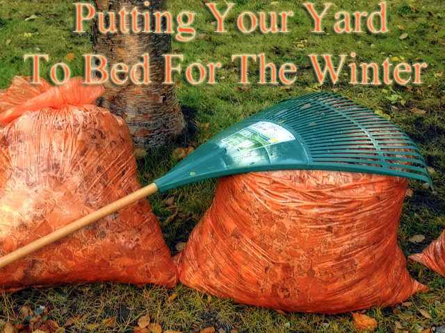 yard to bed.jpg
