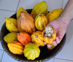 Alexandros Handmade Chocolate