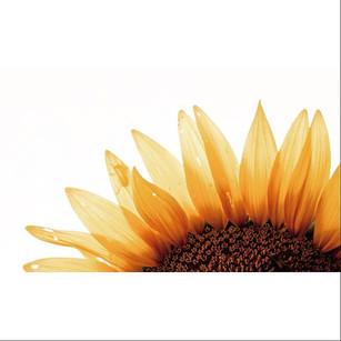 Obligatory Kansan sunny post_•_•_•_#sunf