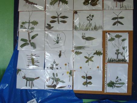 Plantas e Pedrinhas do Rio Paiva - 1º, 2º, 3º anos EB Mões