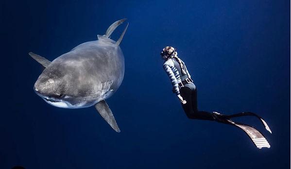 Kay Burns shark diver Human Impact podcast