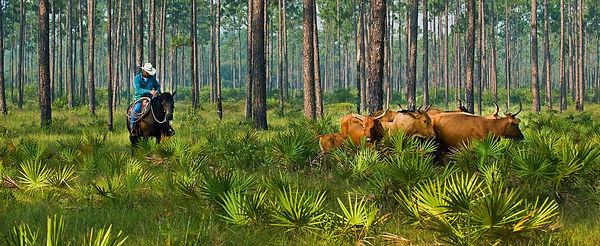 Great Florida Cattle Drive.jpg