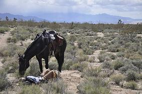 Mojave Desert ride.JPG