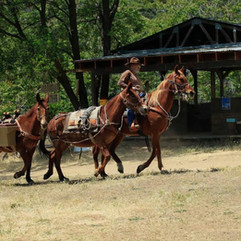Horse and mule packing