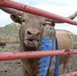 scratchpad_buffalo.jpg